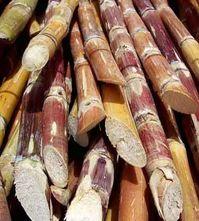 cut-sugarcane.jpg