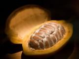Le cours du cacao perturbé par Côte d'Ivoire et Harmattan