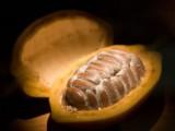 Le cours du cacao boosté par des craintes d'un déficit d'offre